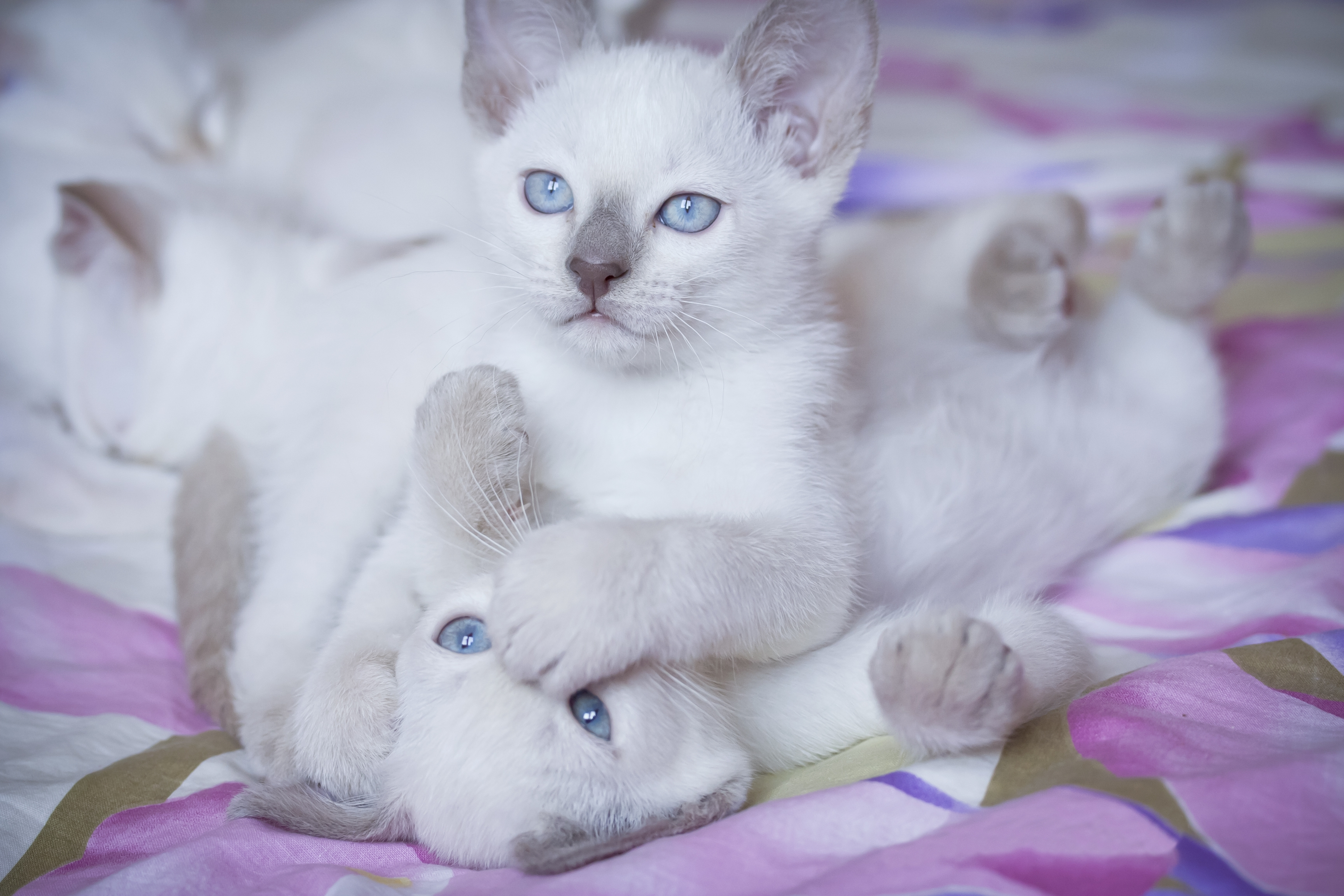 150728 Screensavers and Wallpapers Kittens for phone. Download Animals, Light, Bright, Color, Playful, Kittens pictures for free
