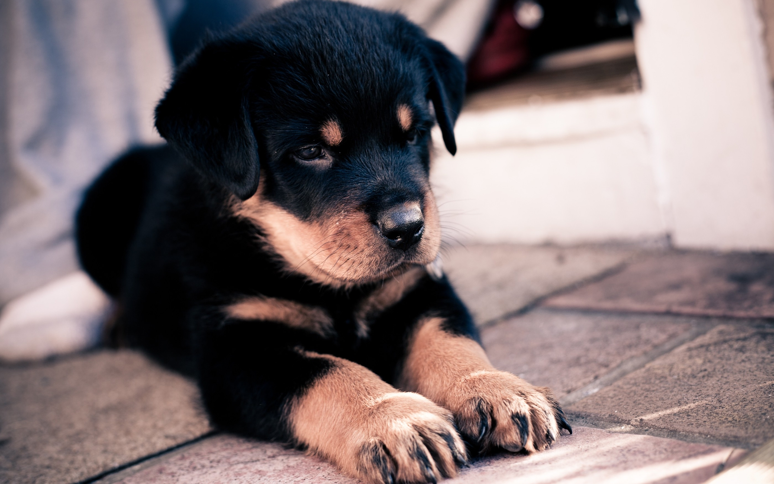 40709 download wallpaper Animals, Dogs screensavers and pictures for free