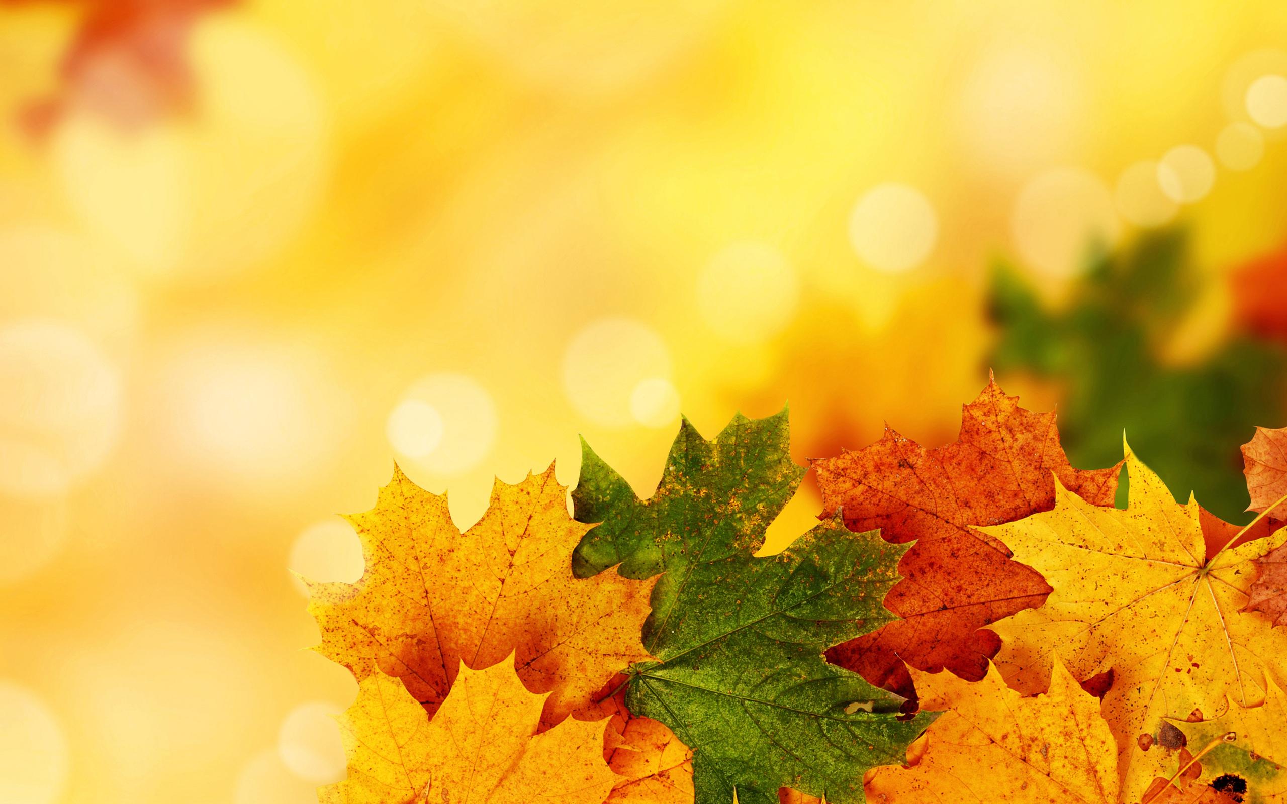 24805 скачать обои Растения, Осень, Листья - заставки и картинки бесплатно