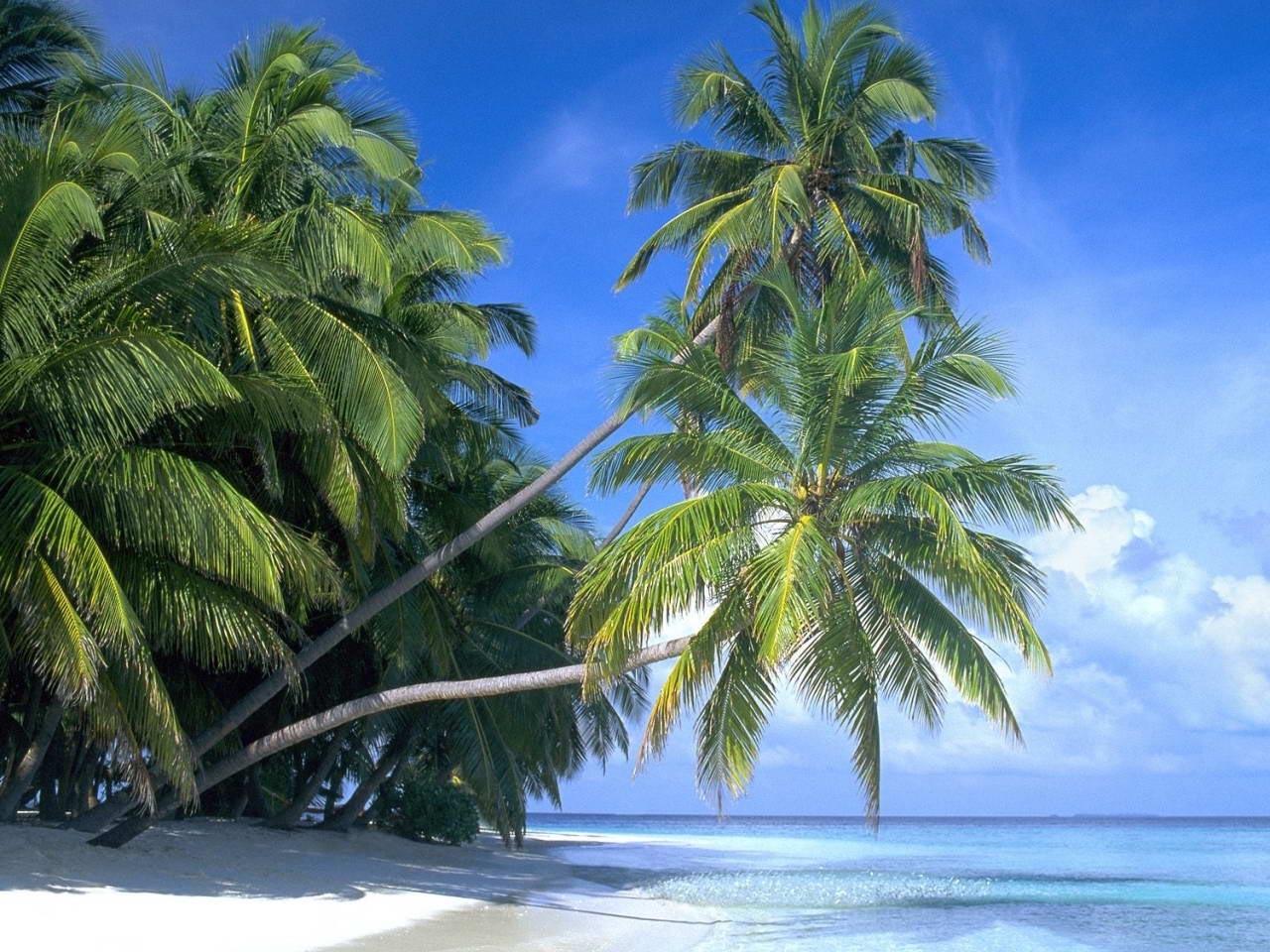 34202 descargar fondo de pantalla Playa, Palms, Paisaje: protectores de pantalla e imágenes gratis