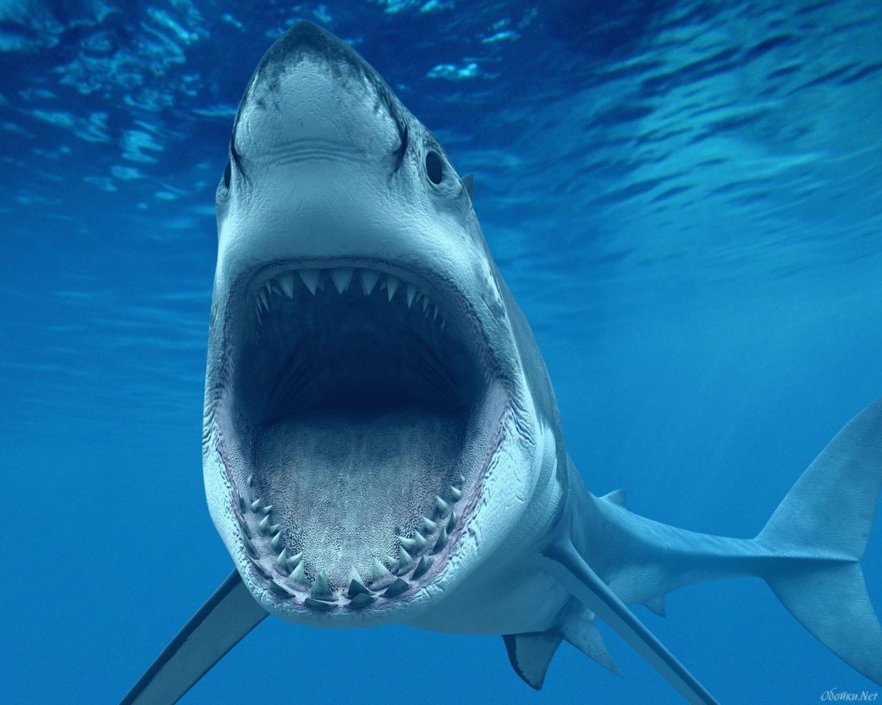21053 Заставки и Обои Рыбы на телефон. Скачать Рыбы, Акулы, Животные, Море картинки бесплатно