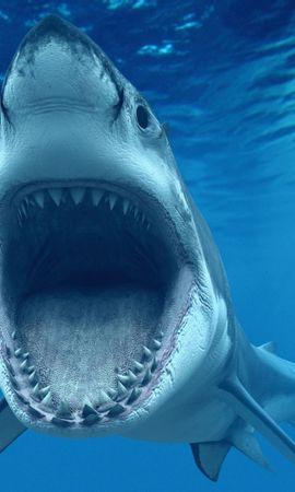 21053 baixar papel de parede Animais, Mar, Sharks, Peixes - protetores de tela e imagens gratuitamente