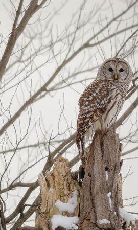 122991 download wallpaper Animals, Owl, Forest, Winter, Wood, Tree screensavers and pictures for free