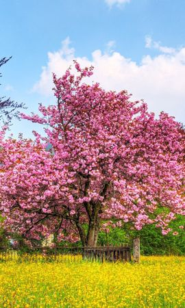 22057 скачать обои Пейзаж, Цветы, Деревья, Трава - заставки и картинки бесплатно
