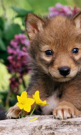 6638 download wallpaper Animals, Dogs screensavers and pictures for free