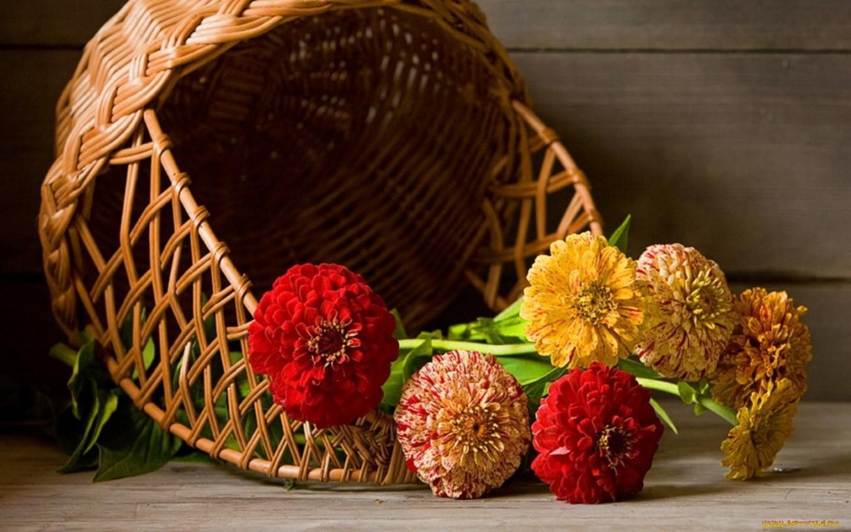 41751 descargar fondo de pantalla Plantas, Flores, Objetos: protectores de pantalla e imágenes gratis