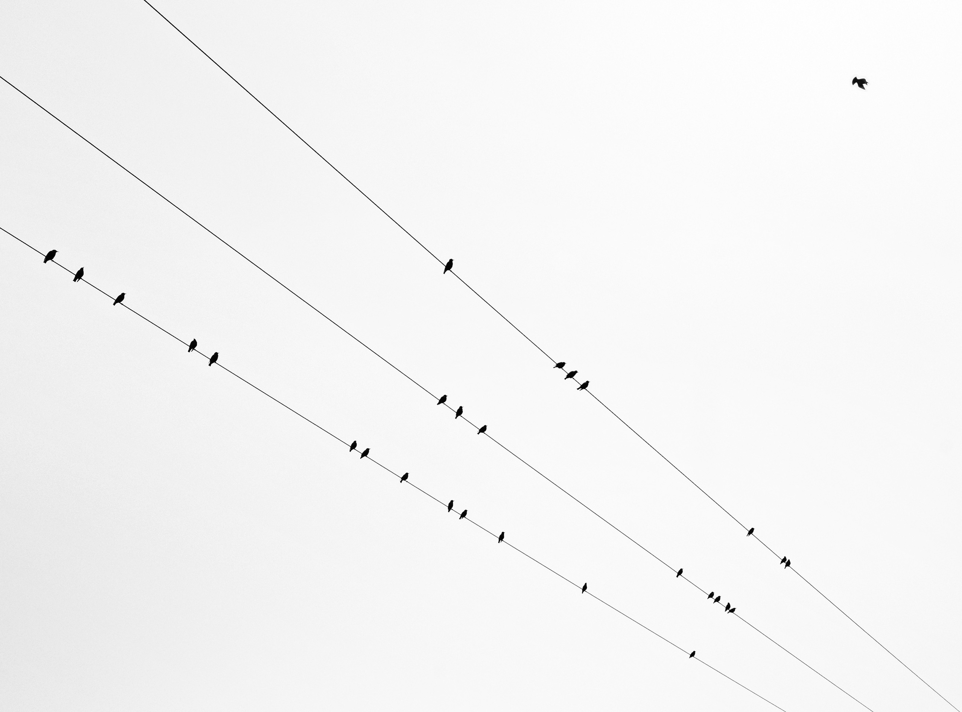 135847 download wallpaper Minimalism, Wires, Wire, Bw, Chb, Birds screensavers and pictures for free