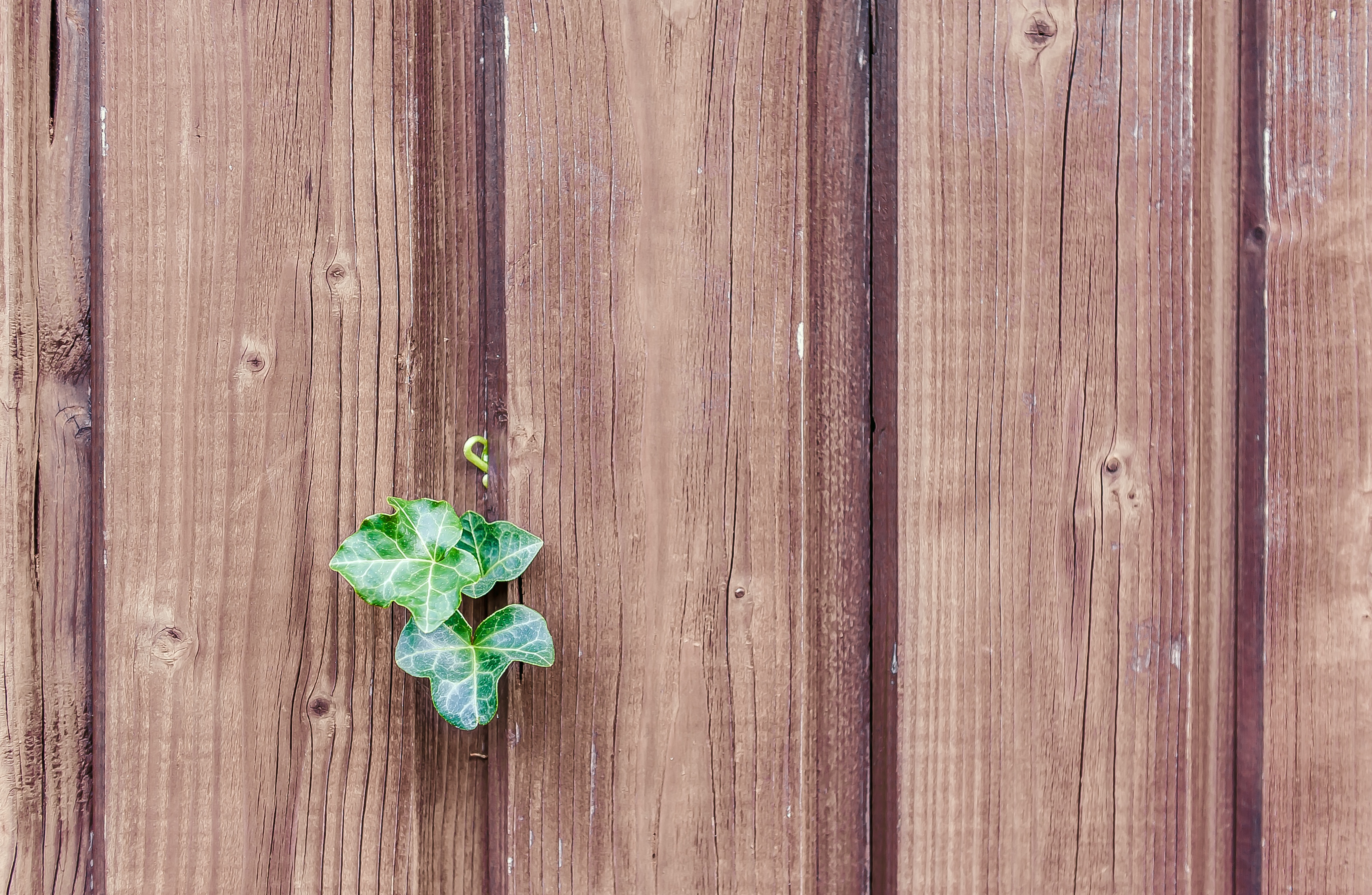 138860 download wallpaper Miscellanea, Miscellaneous, Wall, Fence, Planks, Board, Sheet, Leaf, Plant screensavers and pictures for free
