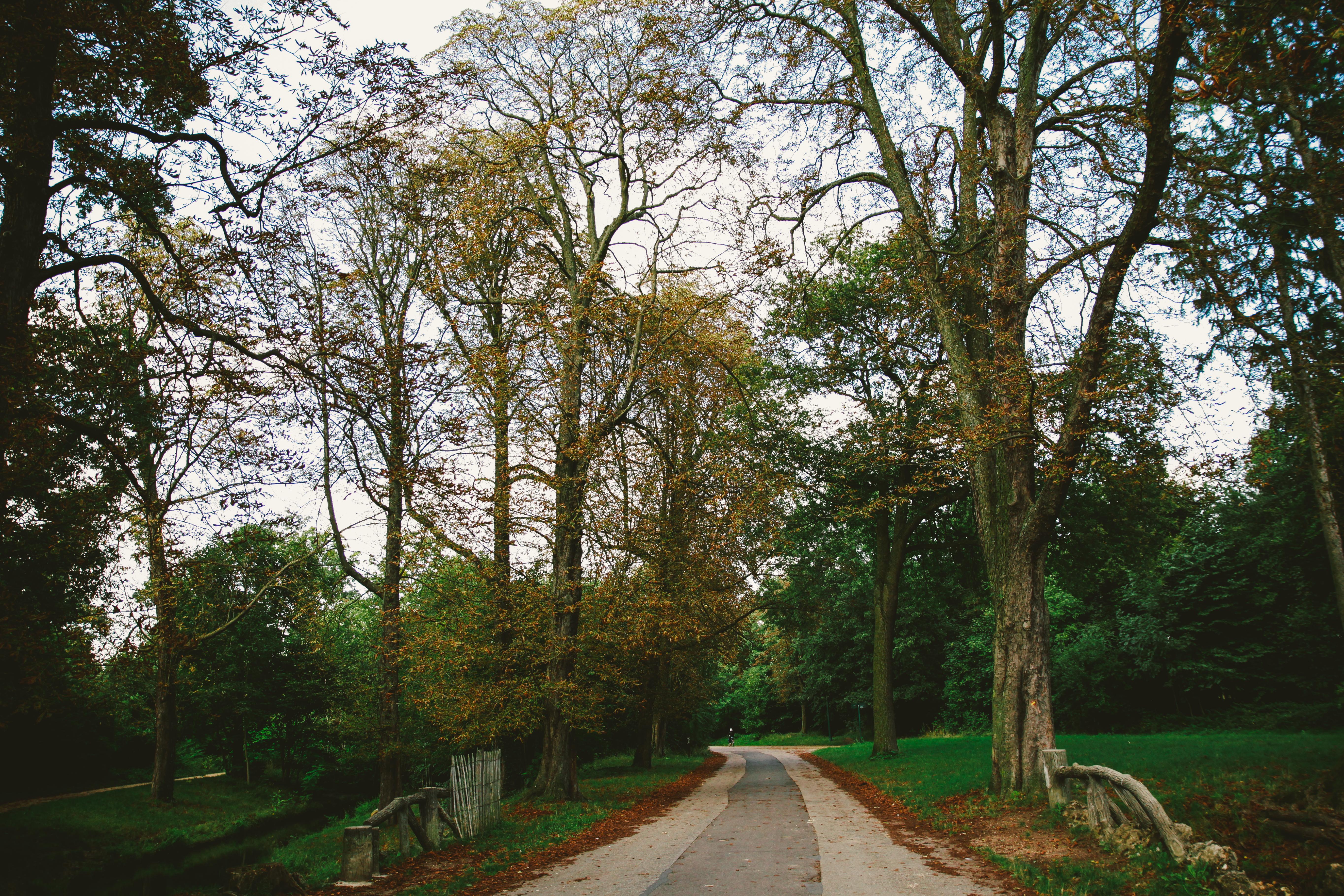 69446壁紙のダウンロード自然, 公園, 道, パス, 秋, 木, パリ-スクリーンセーバーと写真を無料で