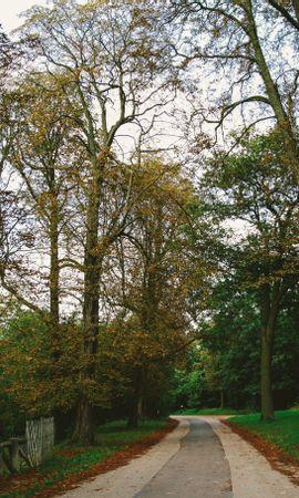 69446 baixar papel de parede Natureza, O Parque, Parque, Caminho, Outono, Árvores, Paris - protetores de tela e imagens gratuitamente