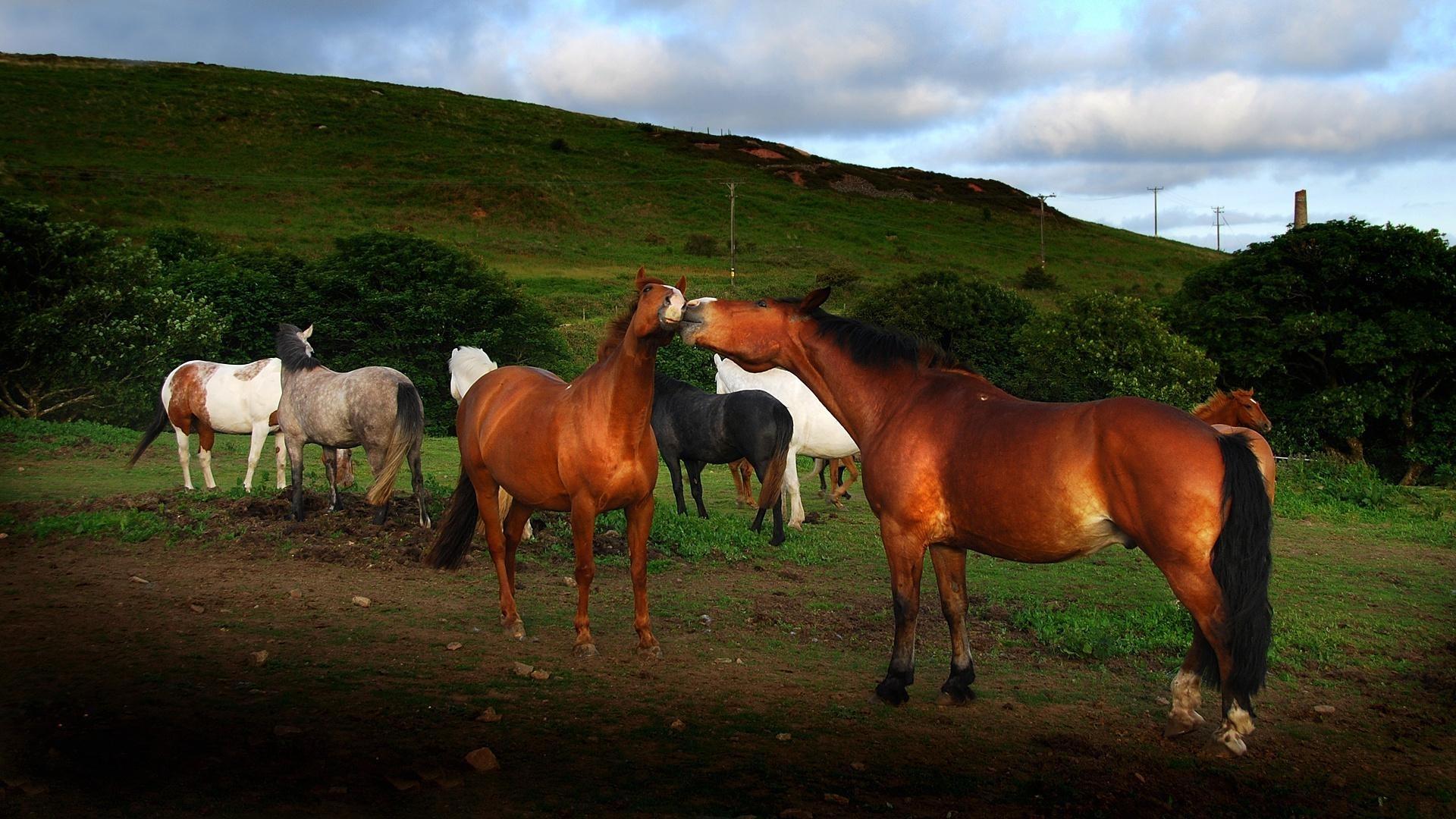 31591 Заставки и Обои Лошади на телефон. Скачать Лошади, Животные картинки бесплатно