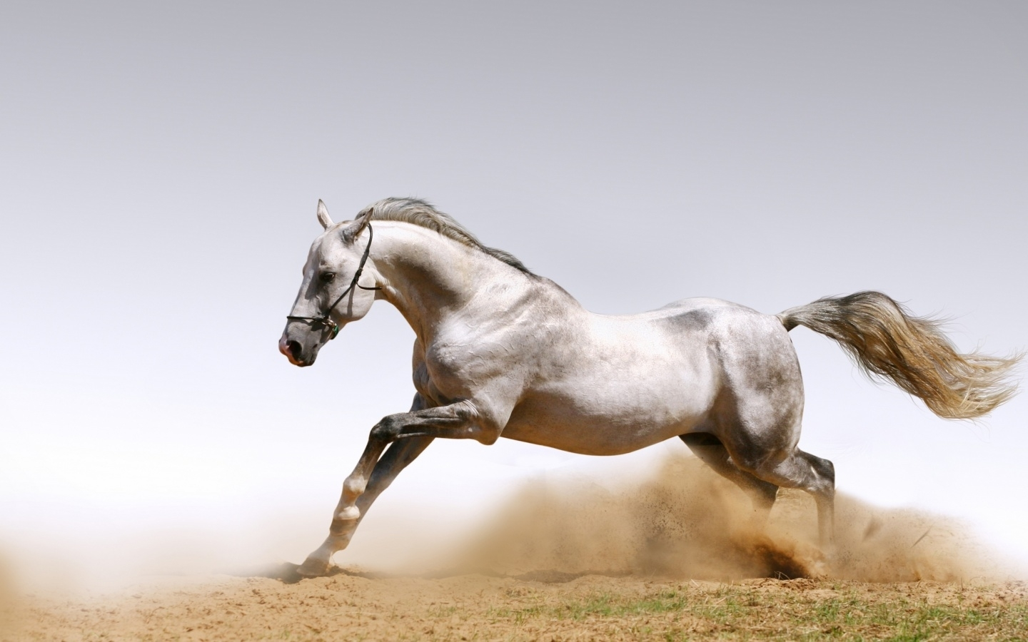 47129 download wallpaper Animals, Horses screensavers and pictures for free