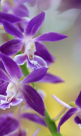 35792 скачать обои Растения, Цветы - заставки и картинки бесплатно