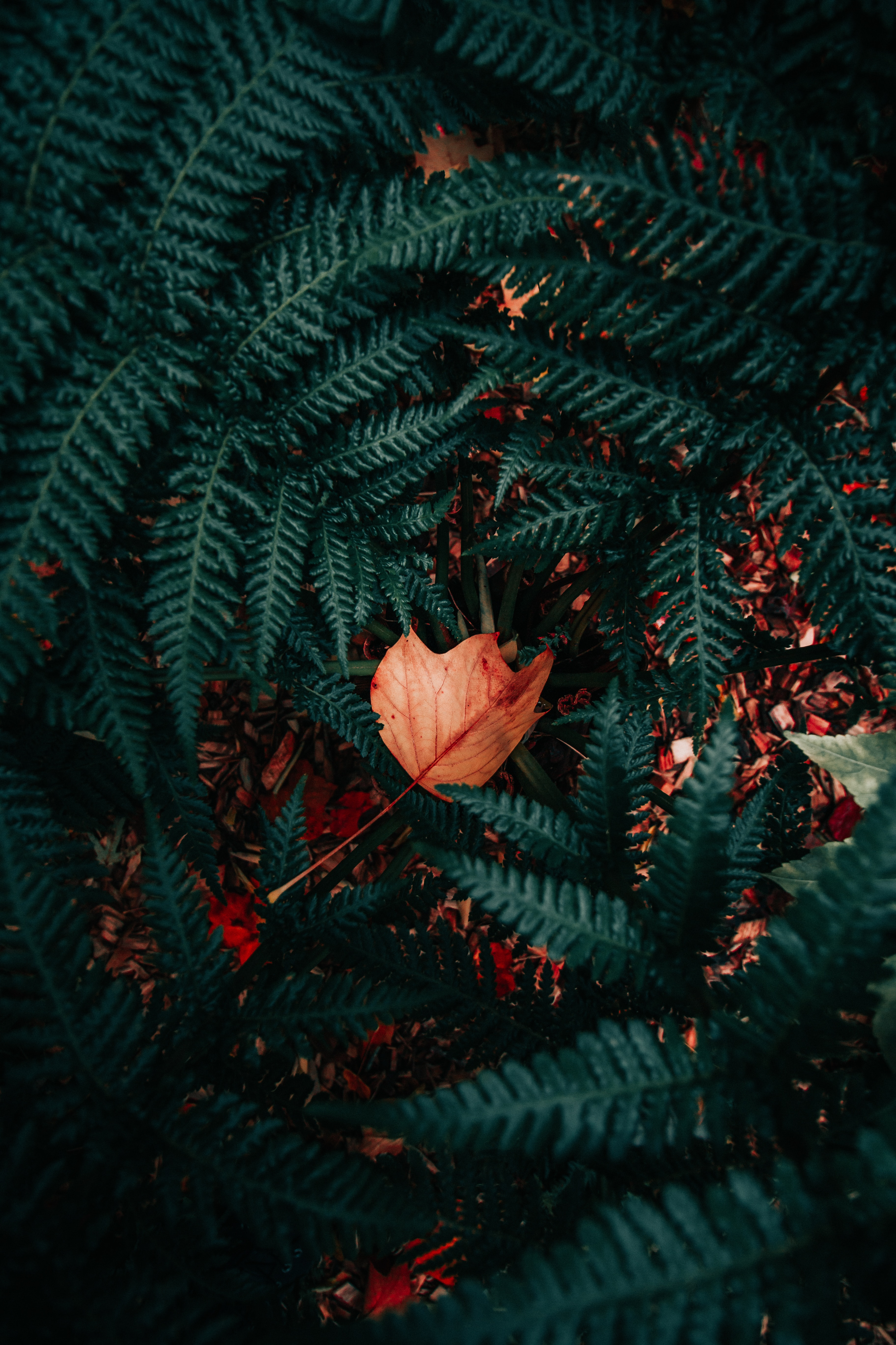 154343 download wallpaper Nature, Plant, Fern, Foliage, Dry screensavers and pictures for free