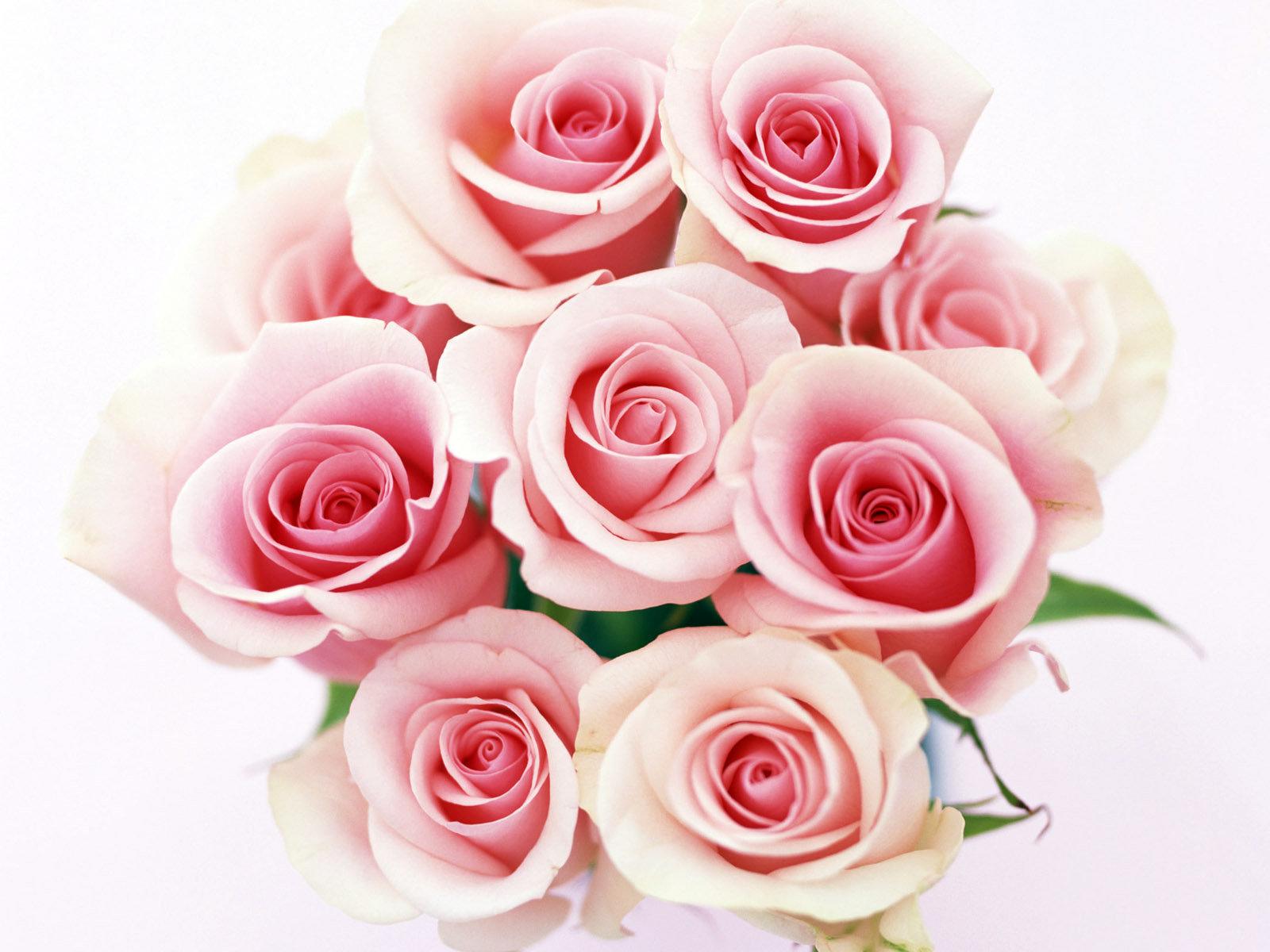 10618 скачать обои Праздники, Растения, Цветы, Розы, Открытки, 8 Марта - заставки и картинки бесплатно
