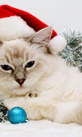 27862 скачать обои Праздники, Животные, Кошки (Коты, Котики), Новый Год (New Year) - заставки и картинки бесплатно