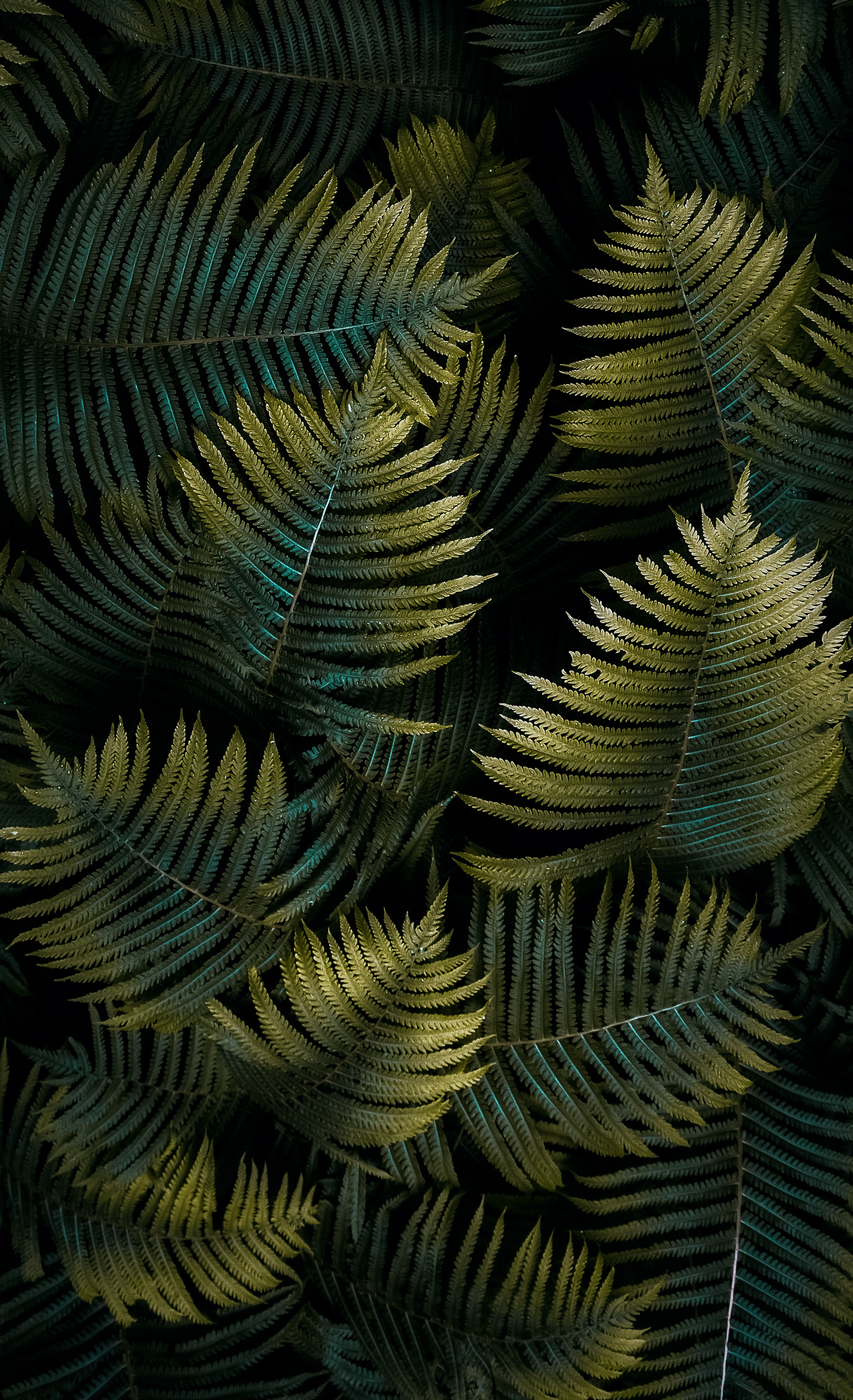 60198 download wallpaper Nature, Macro, Fern, Sheet, Leaf screensavers and pictures for free