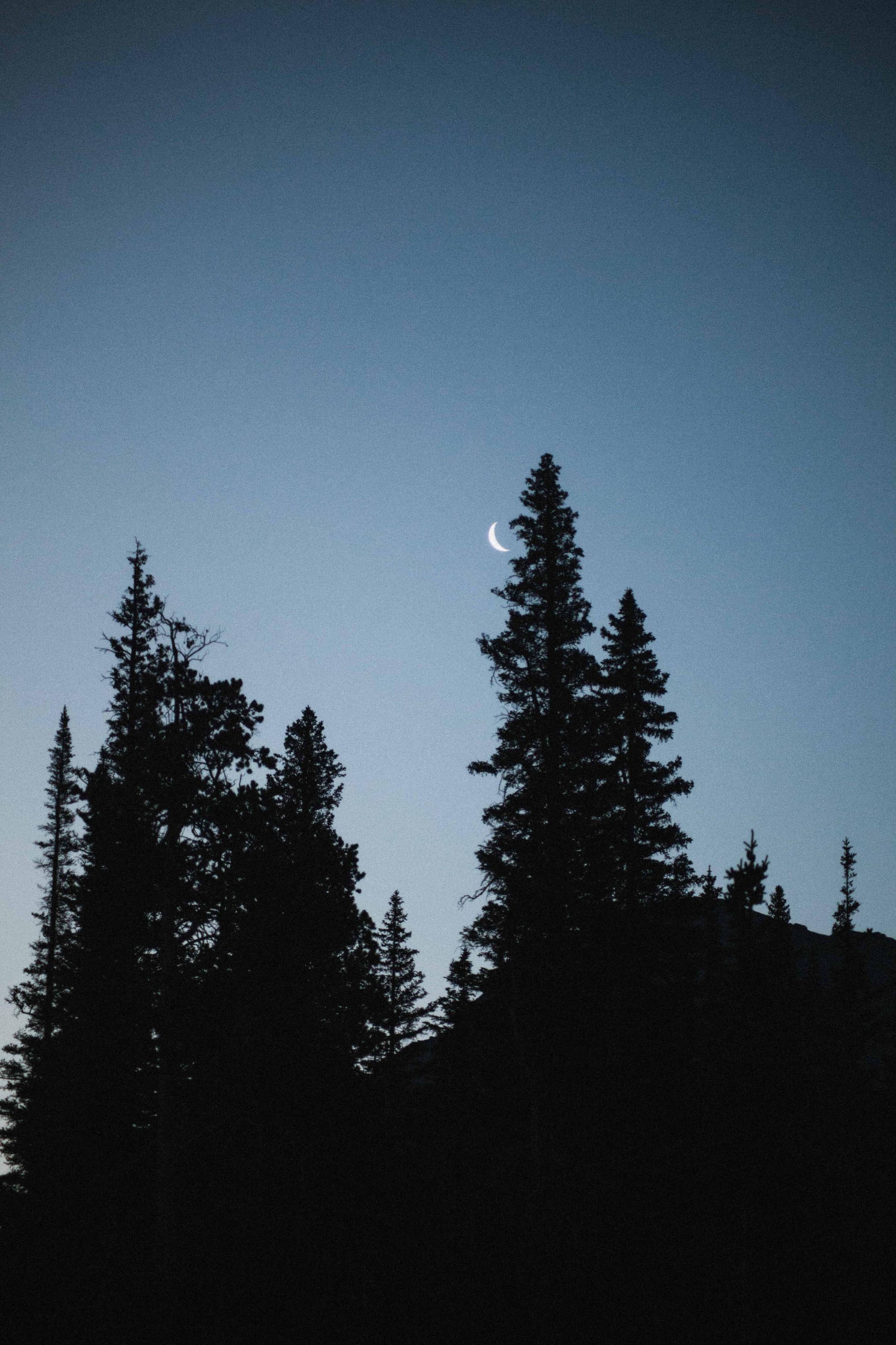 142650 免費下載壁紙 性质, 月球, 云杉, 耶鲁, 晚上, 树 屏保和圖片