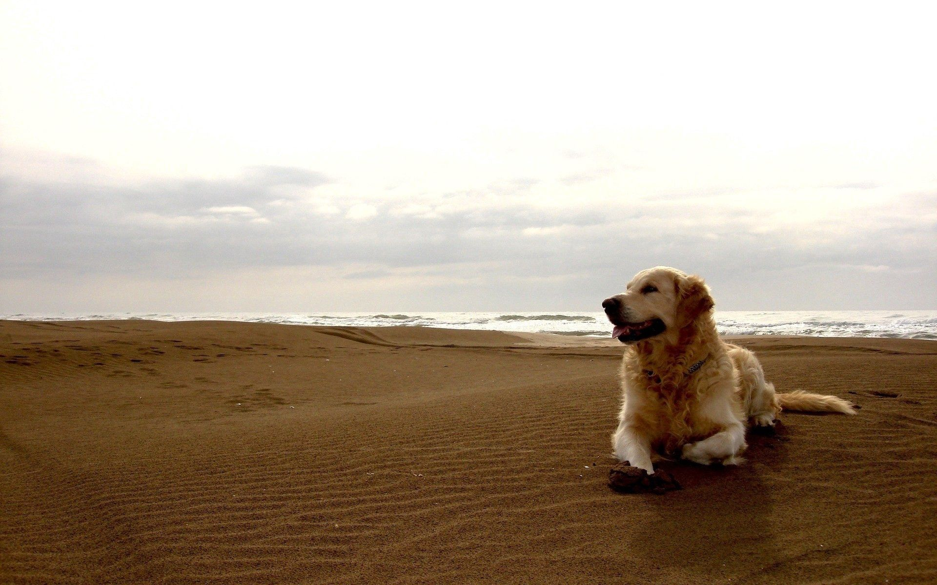 89710 download wallpaper Animals, Dog, Labrador, Shore, Bank, Sand screensavers and pictures for free