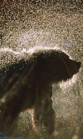 34002 baixar papel de parede Animais, Bears - protetores de tela e imagens gratuitamente