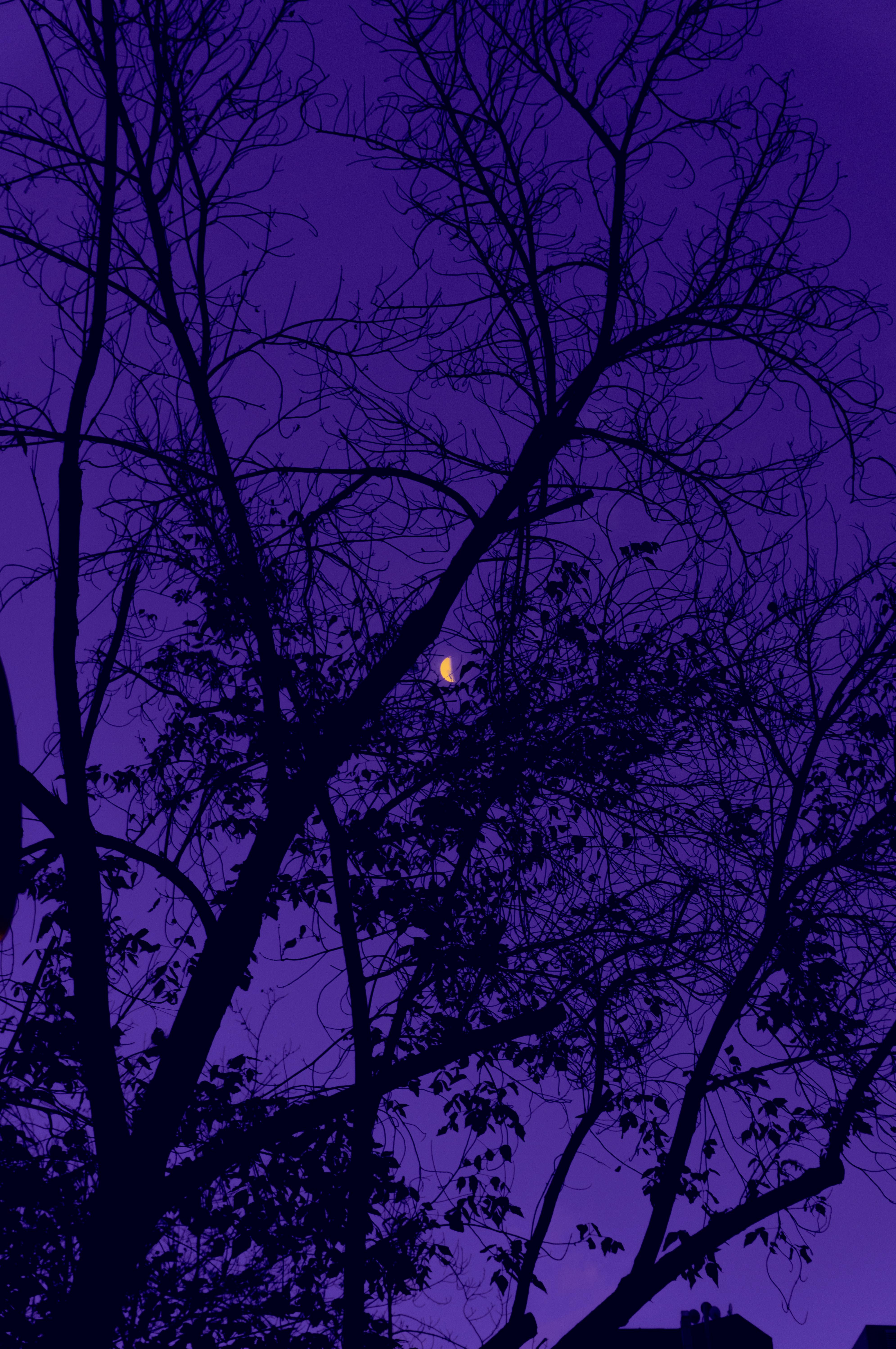 60269 descargar fondo de pantalla Violeta, Árboles, Cielo, Noche, Luna, Oscuro, Púrpura: protectores de pantalla e imágenes gratis
