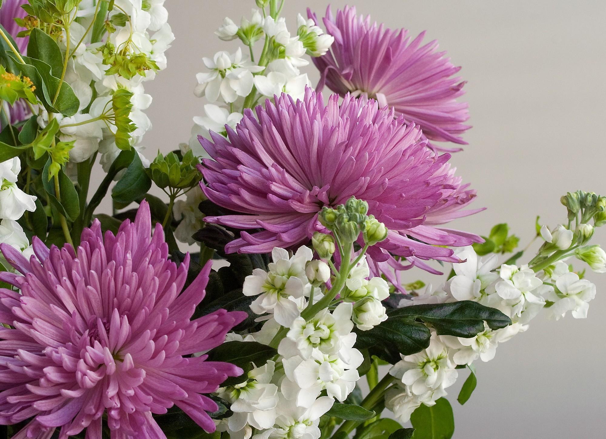 92383 скачать обои Цветы, Букет, Крупный План, Хризантемы - заставки и картинки бесплатно