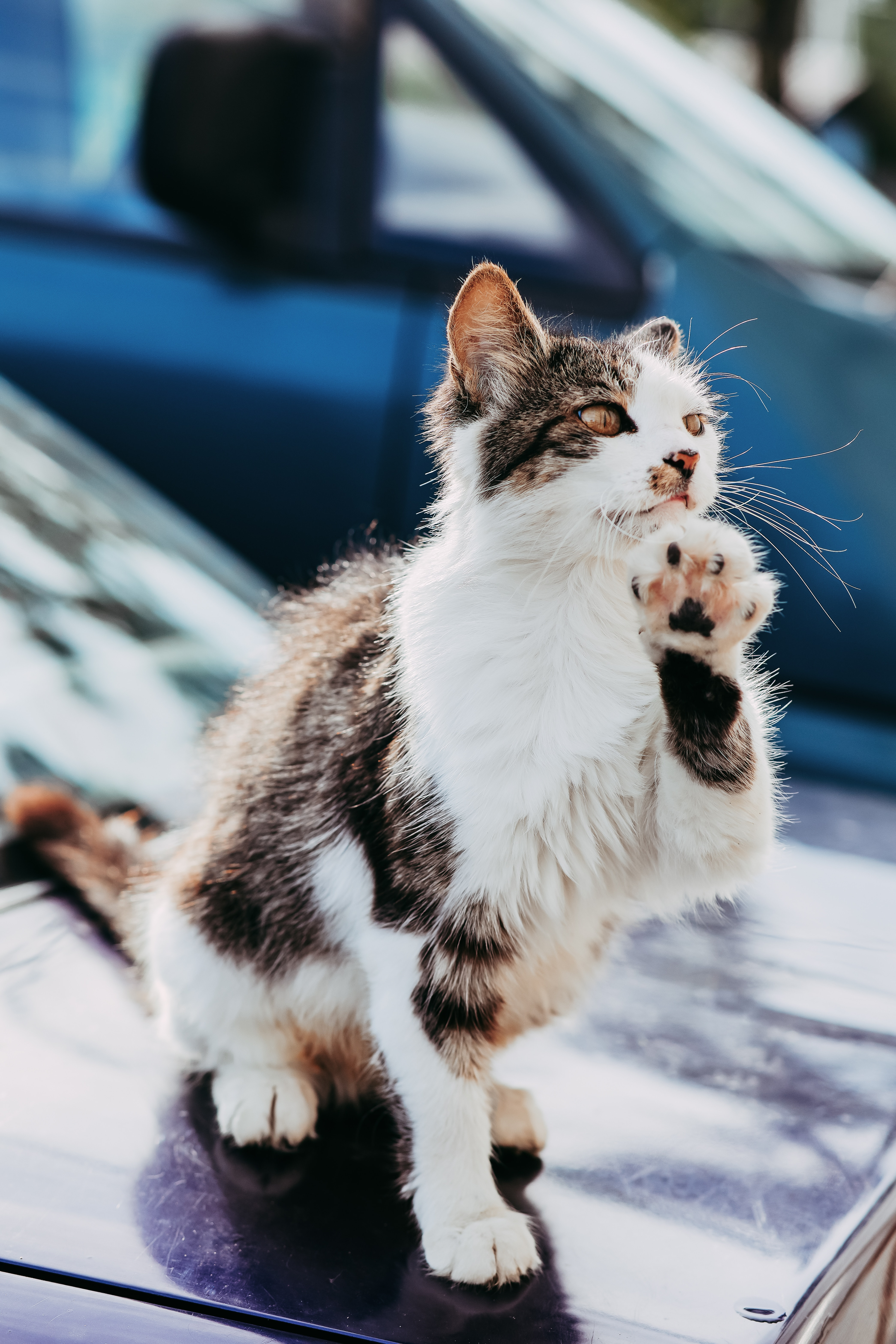 62580 download wallpaper Animals, Cat, Paw, Cool, Pet screensavers and pictures for free