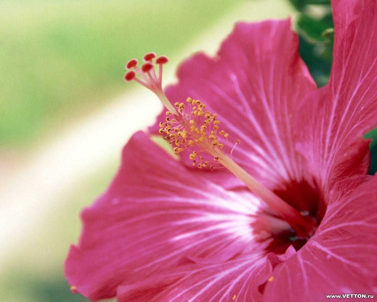 2998 скачать обои Растения, Цветы - заставки и картинки бесплатно