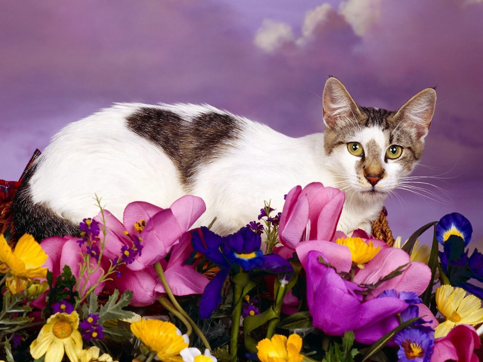 82412 download wallpaper Animals, Cat, Sit, Spotted, Spotty, Flowers screensavers and pictures for free