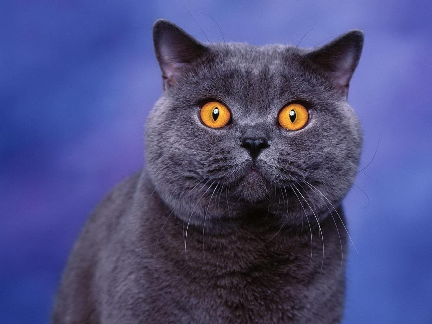 23464 обои 720x1520 на телефон бесплатно, скачать картинки Кошки (Коты, Котики), Животные 720x1520 на мобильный