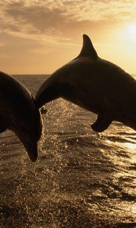 36604 baixar papel de parede Animais, Golfinhos - protetores de tela e imagens gratuitamente