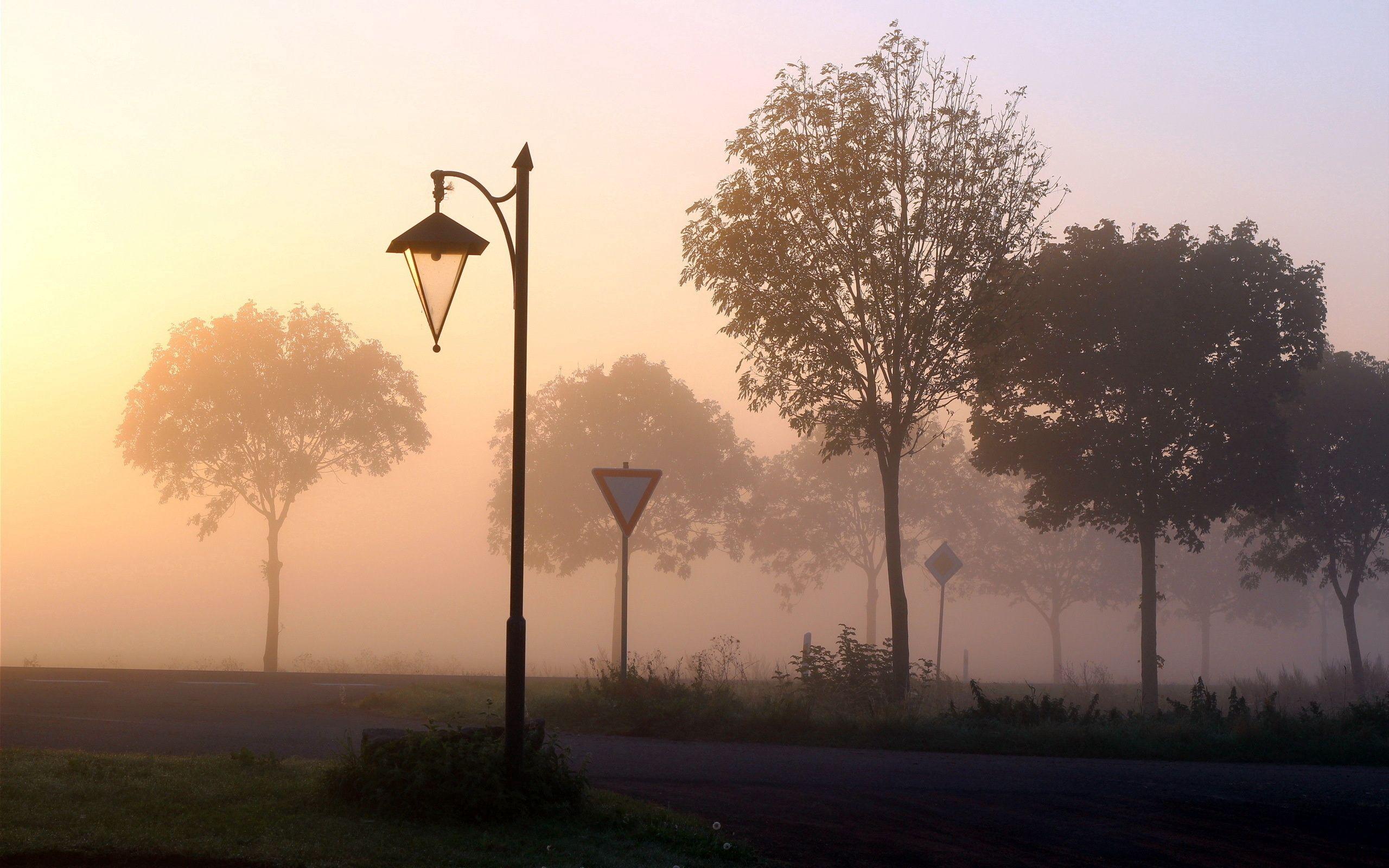 141341 скачать обои Природа, Деревья, Знаки, Туман, Фонарь - заставки и картинки бесплатно