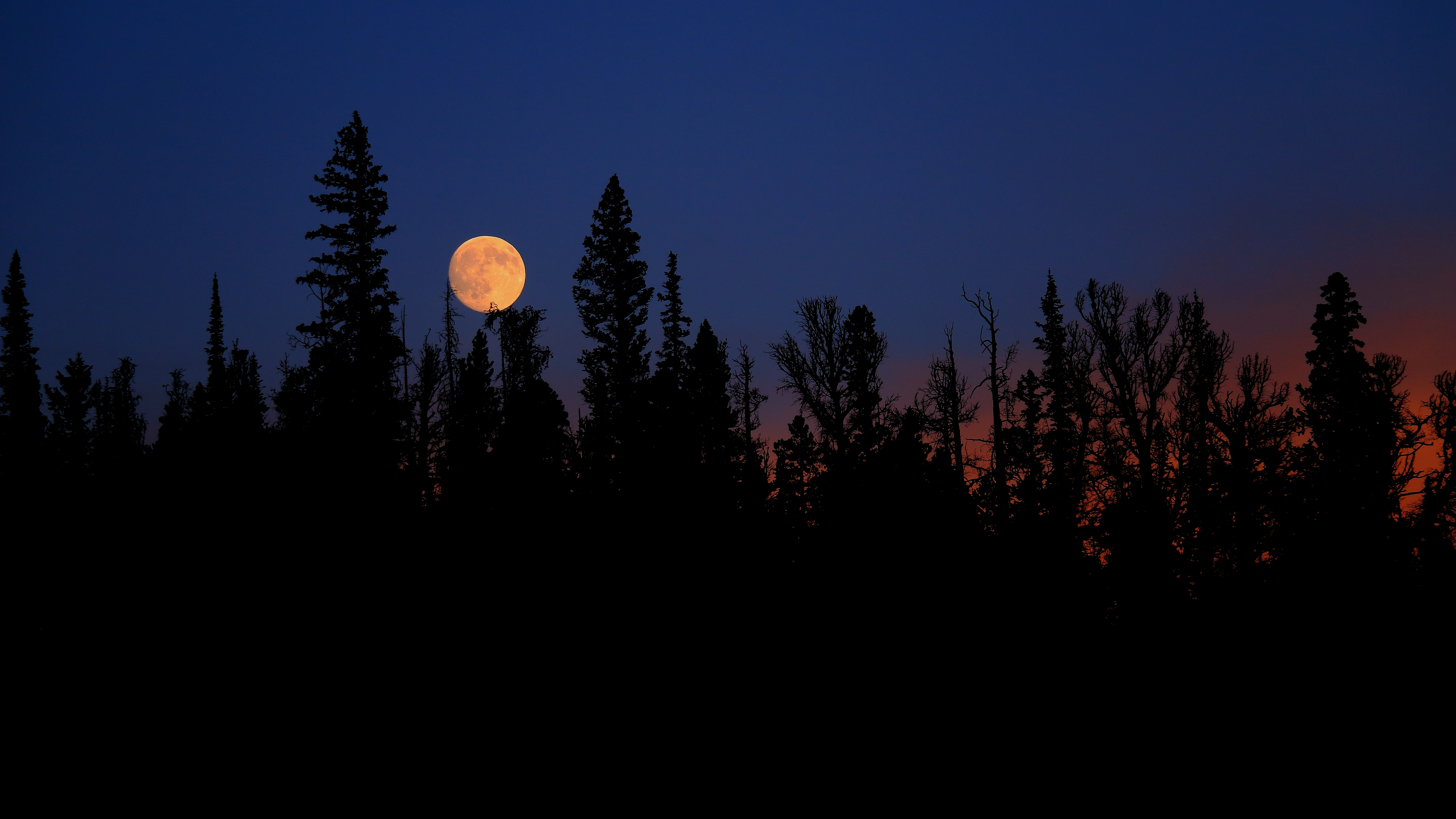 97354 Screensavers and Wallpapers Spruce for phone. Download Nature, Trees, Night, Moon, Spruce, Fir pictures for free