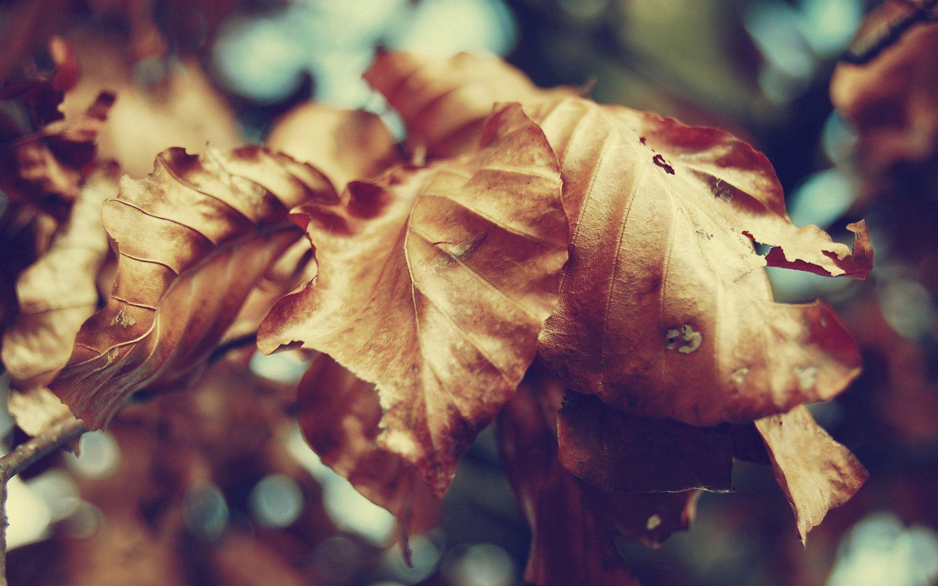 133162 скачать обои Макро, Листья, Осень, Сухой, Форма - заставки и картинки бесплатно