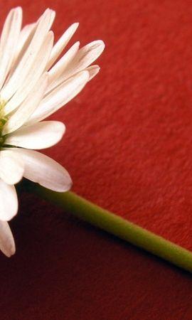 146287 скачать обои Цветы, Цветок, Пыльца, Белый, Поверхность - заставки и картинки бесплатно