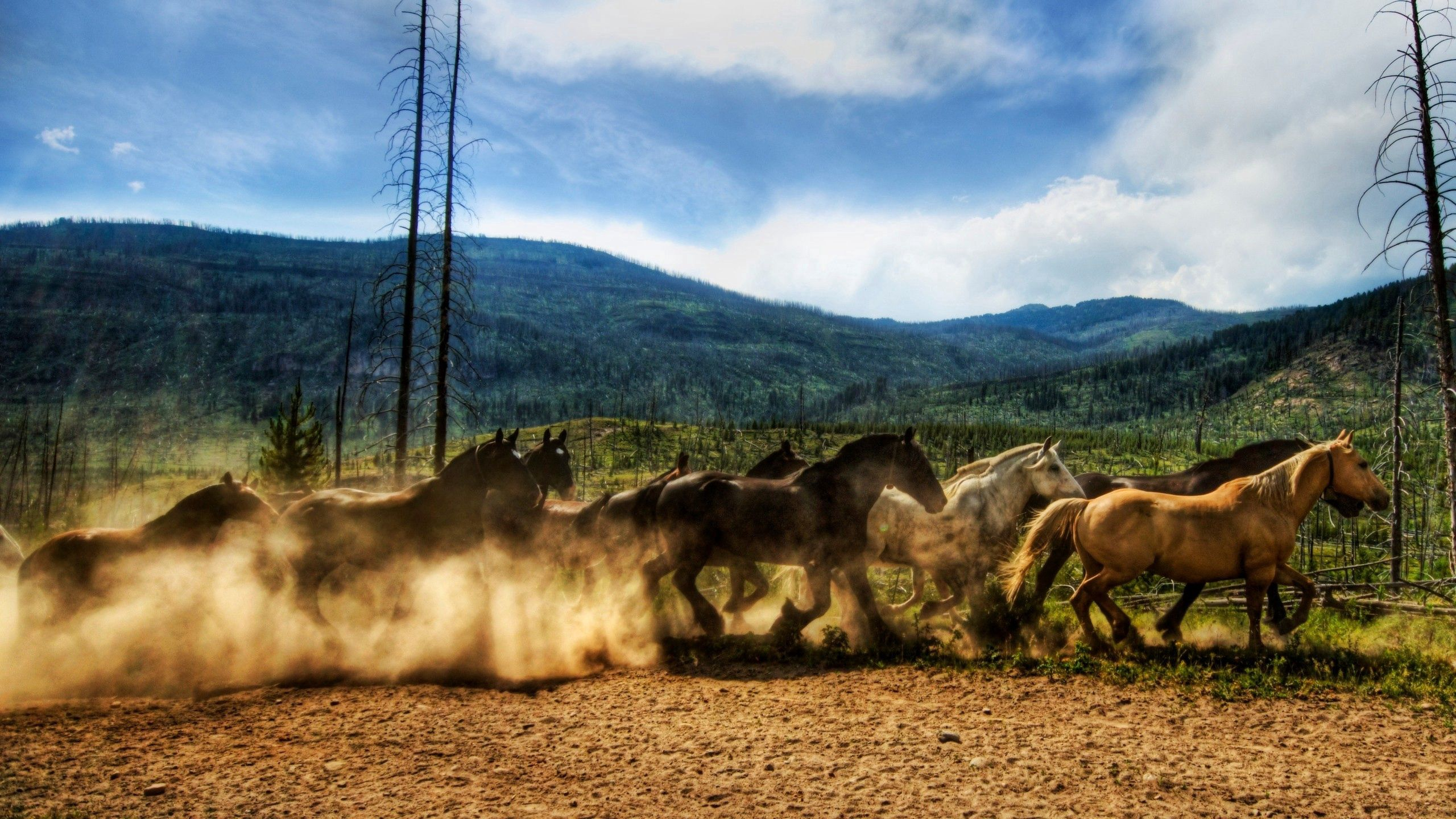 88951 download wallpaper Animals, Horses, Dust, Corral, Herd, Run, Running screensavers and pictures for free