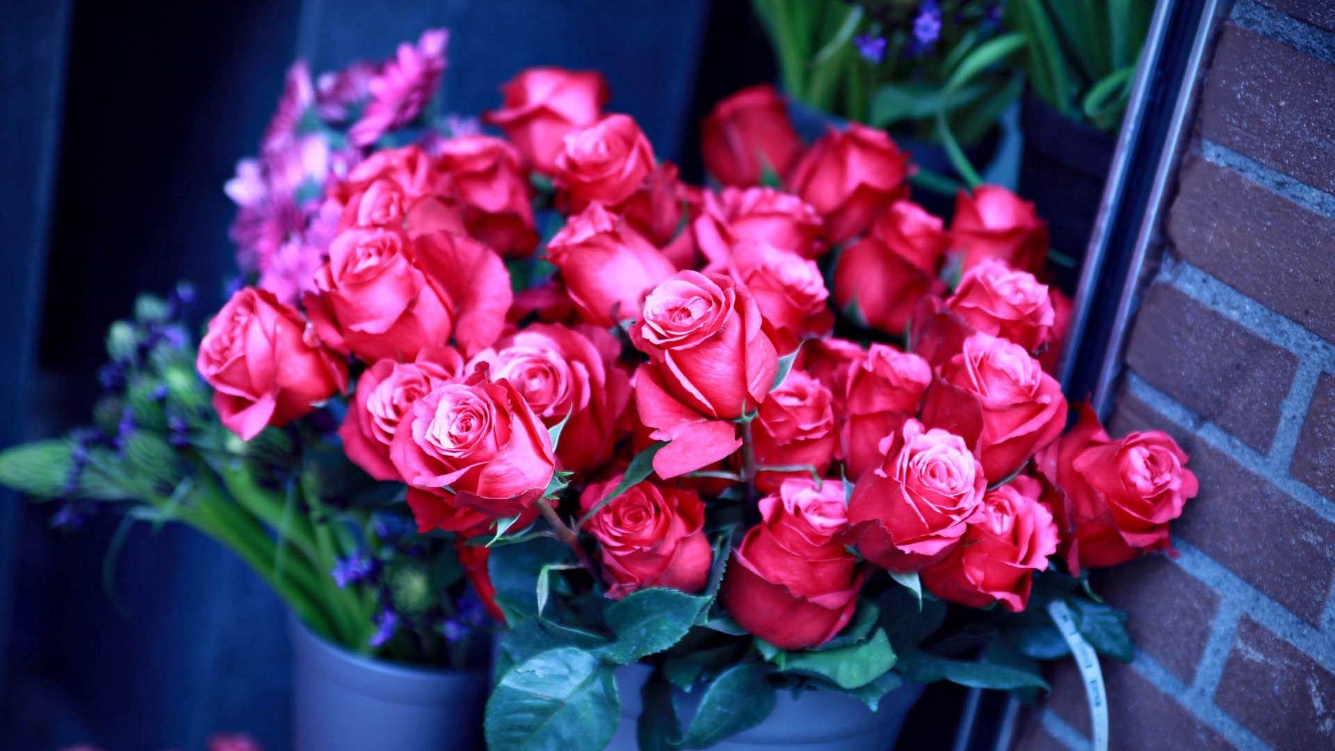 97236 скачать обои Розы, Цветы, Букет, Розовые - заставки и картинки бесплатно