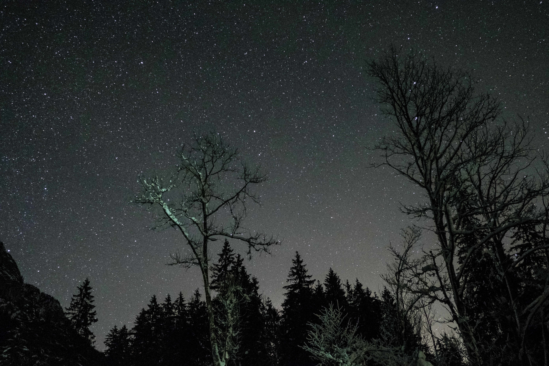 70801 скачать обои Темные, Небо, Ночь, Звезды, Деревья - заставки и картинки бесплатно