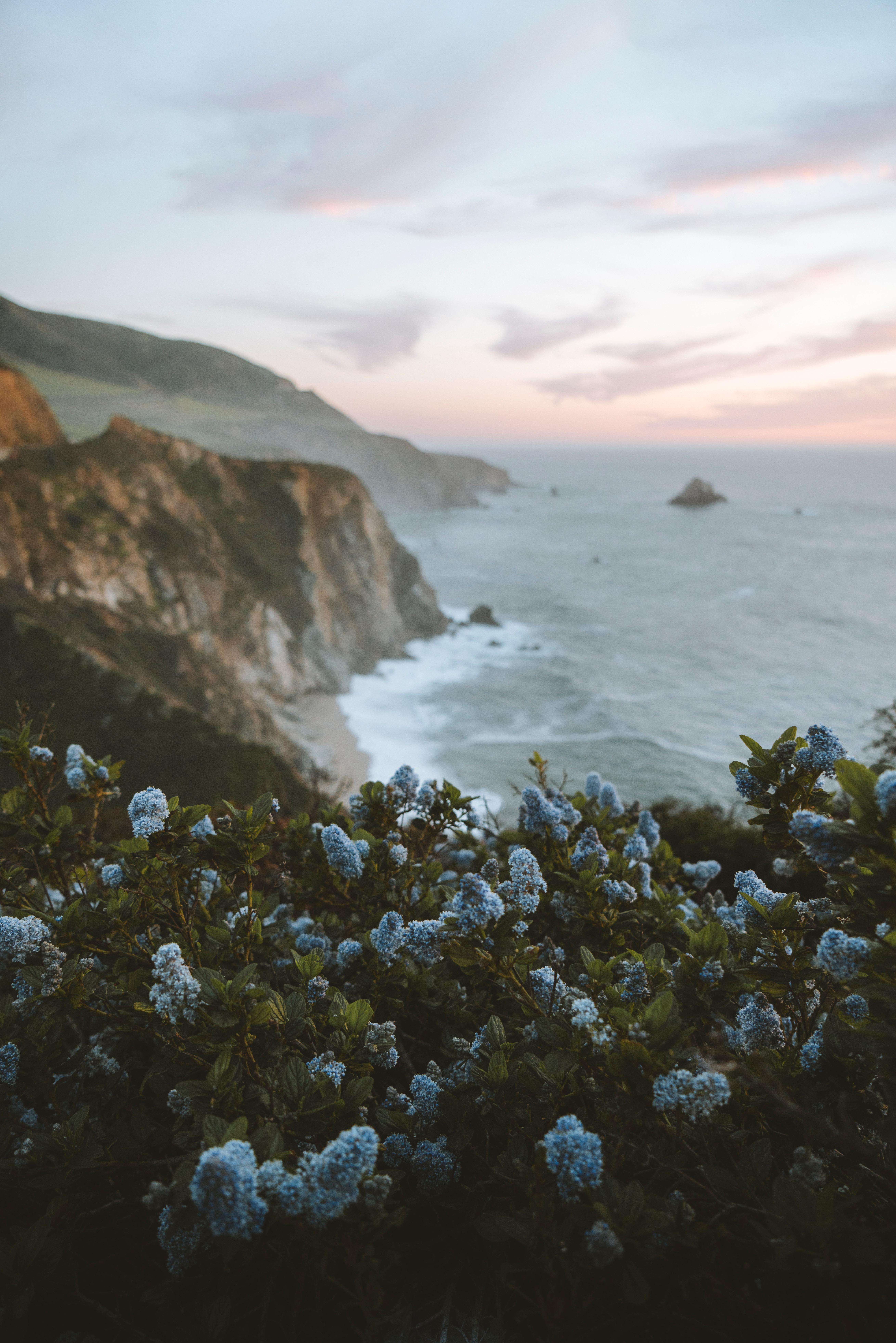 97891 Hintergrundbild herunterladen Natur, Blumen, Sea, Lilac, Felsen, Die Steine, Küste - Bildschirmschoner und Bilder kostenlos