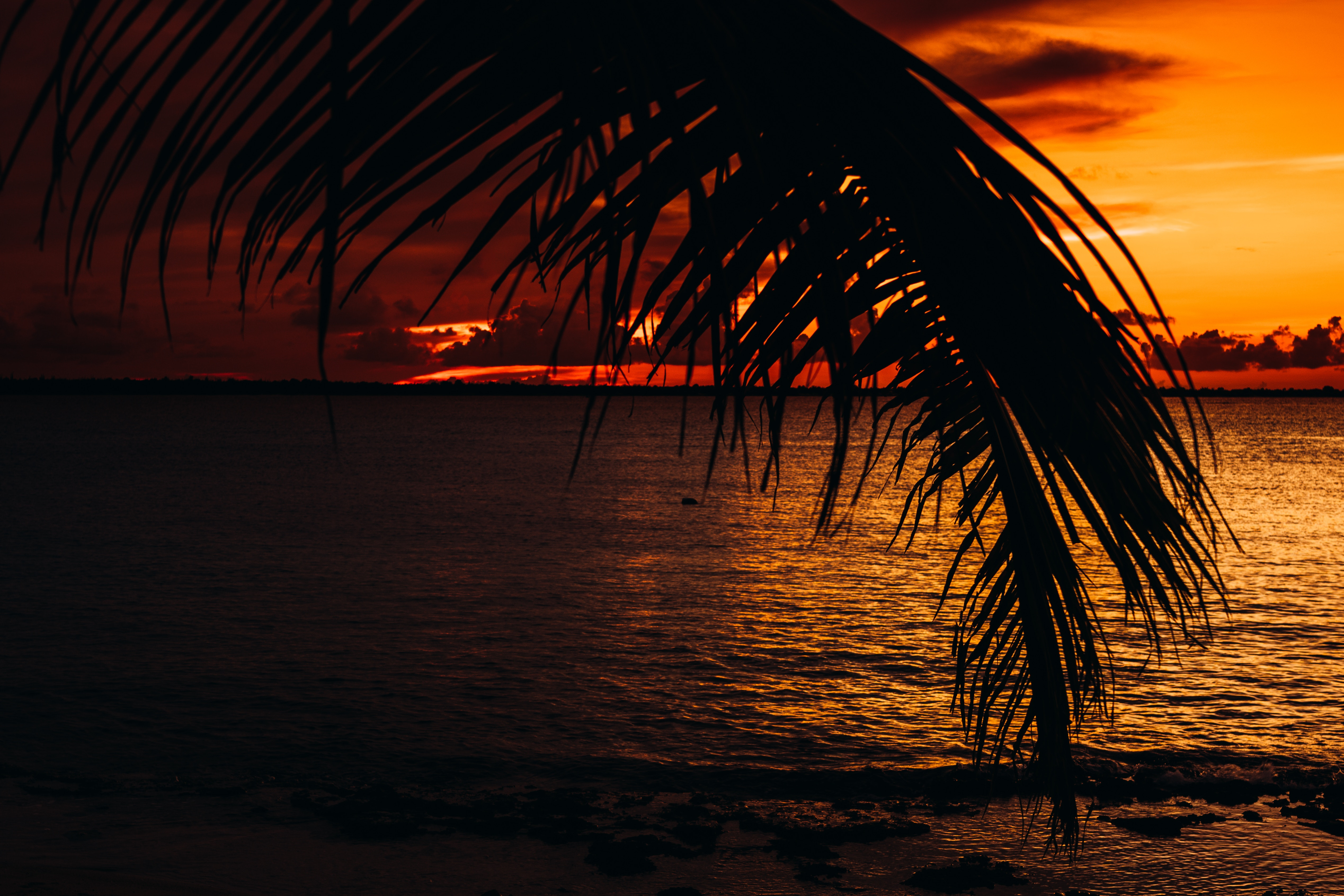 94034 download wallpaper Sunset, Sea, Twilight, Dark, Palm, Dusk screensavers and pictures for free
