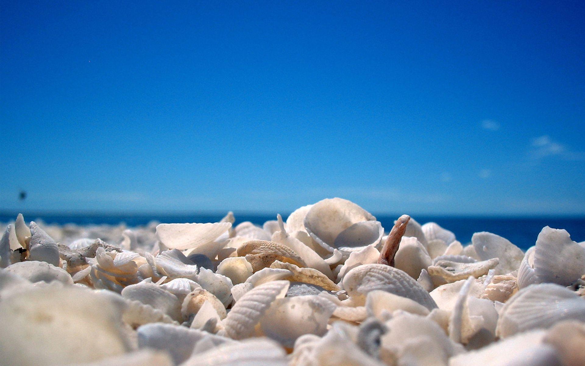 68588 скачать обои Ракушки, Природа, Небо, Пляж, Берег, Голубое - заставки и картинки бесплатно