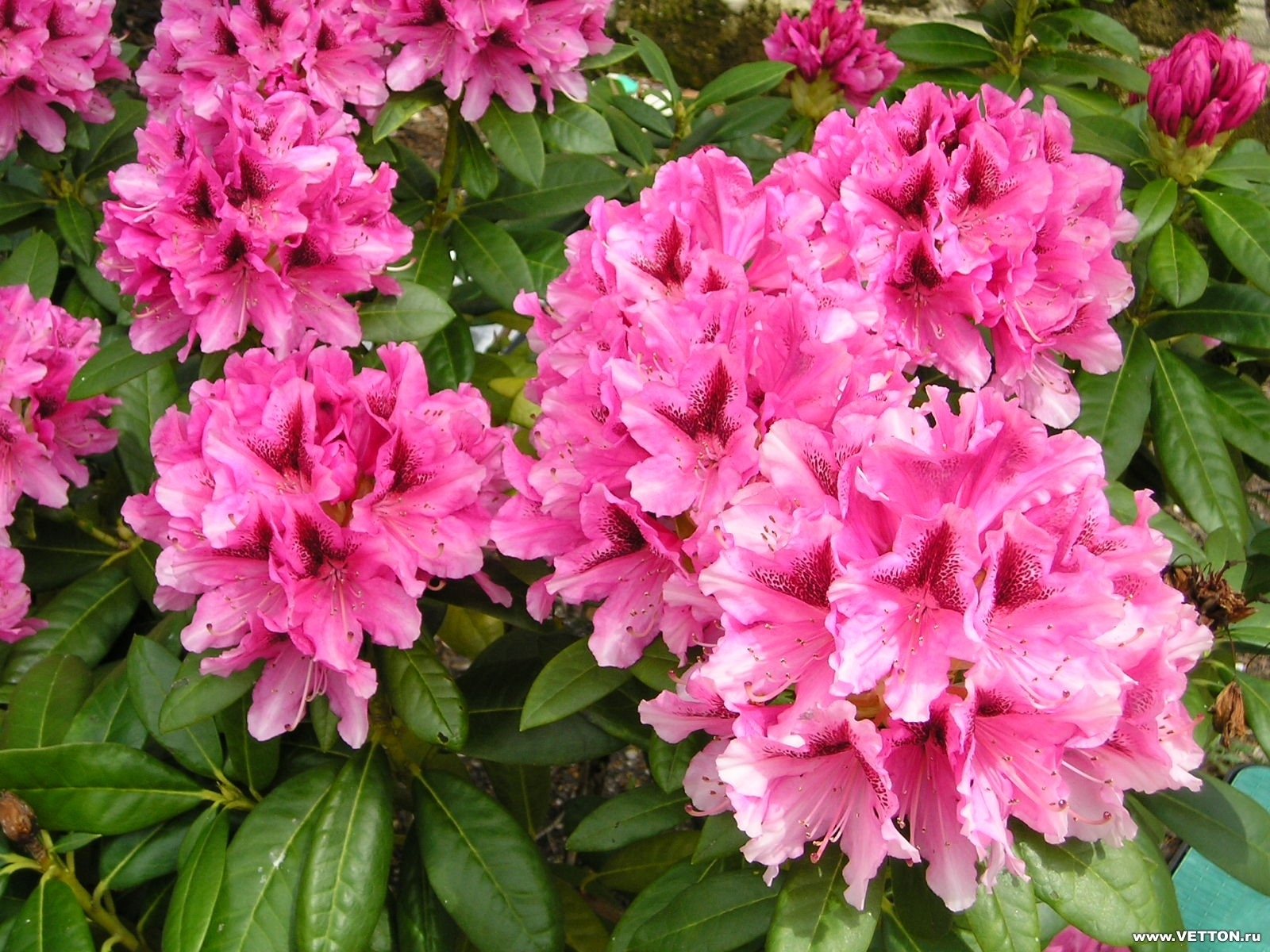 4784 скачать обои Растения, Цветы - заставки и картинки бесплатно