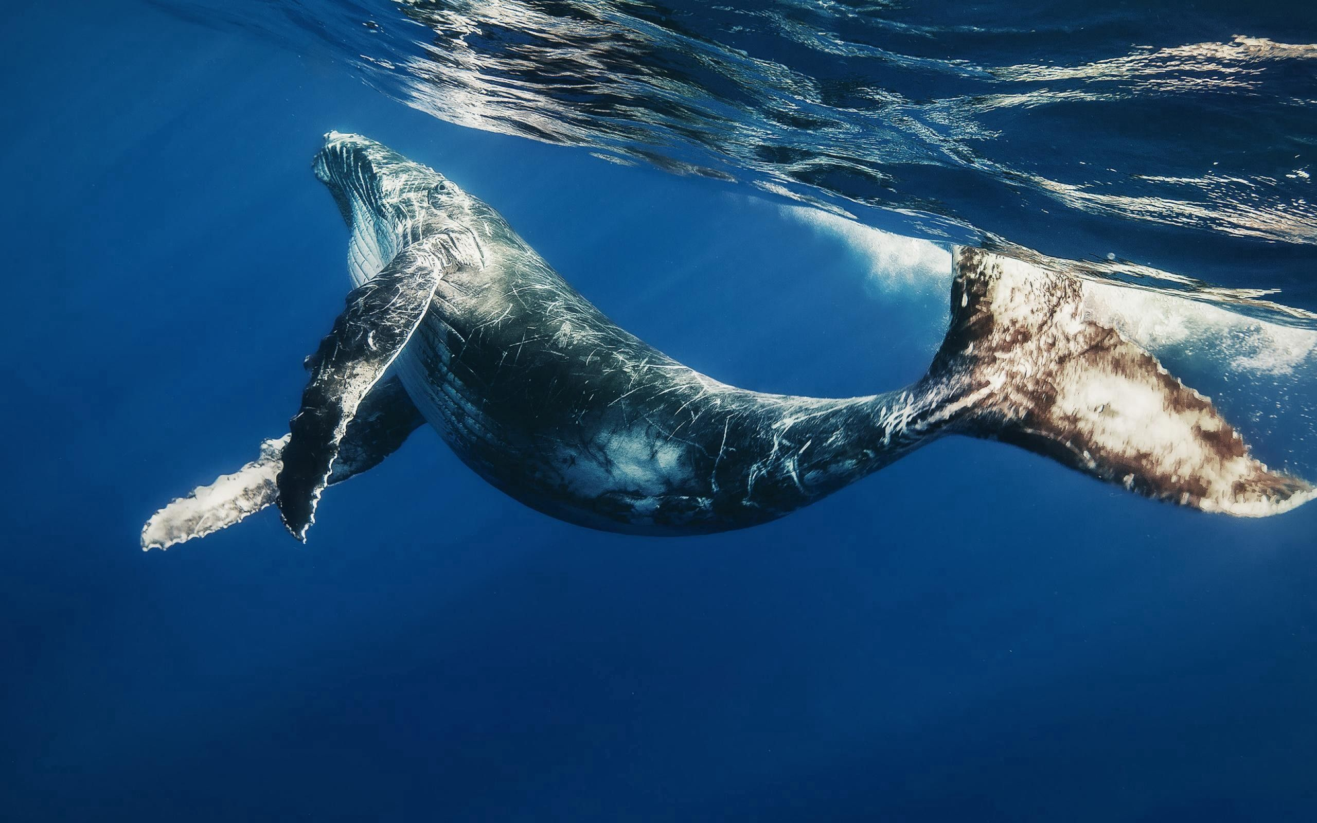127612 download wallpaper Animals, Whale, To Swim, Swim, Under Water, Underwater, Submarine, Water screensavers and pictures for free