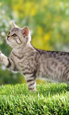 8549 download wallpaper Animals, Cats screensavers and pictures for free