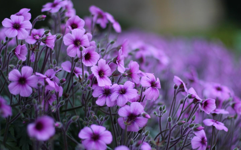 37116 Hintergrundbild herunterladen Blumen, Pflanzen - Bildschirmschoner und Bilder kostenlos