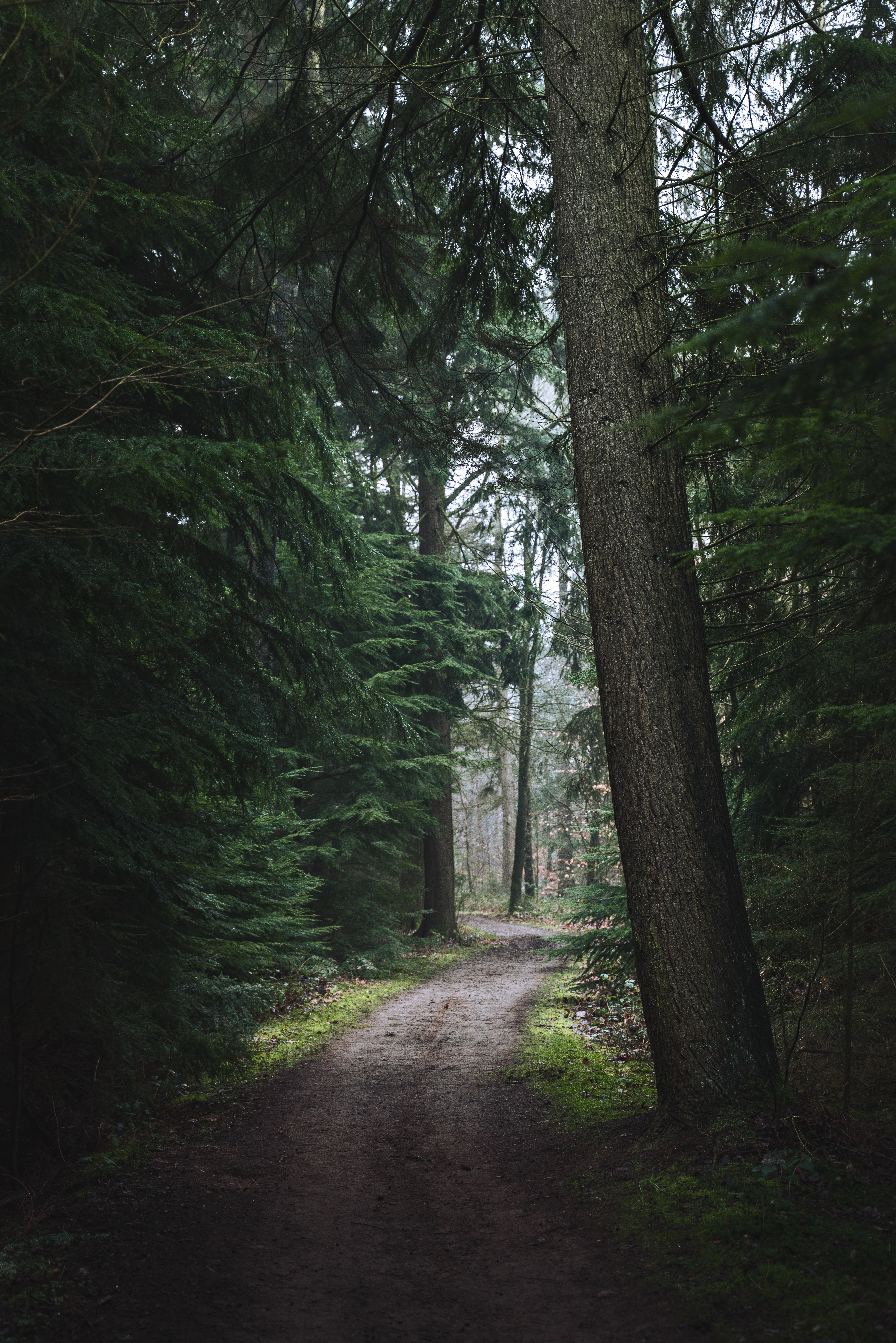 93126 скачать обои Лес, Тропа, Деревья, Природа, Сосны - заставки и картинки бесплатно