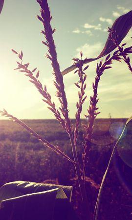 20543 скачать обои Растения, Пейзаж, Поля, Солнце - заставки и картинки бесплатно