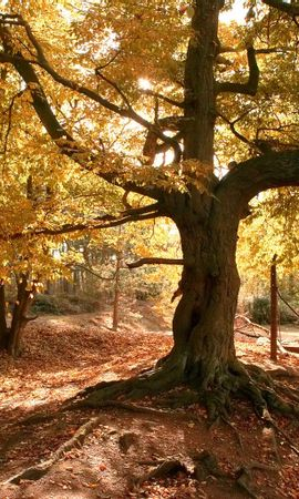 2436 скачать обои Растения, Пейзаж, Деревья, Осень - заставки и картинки бесплатно