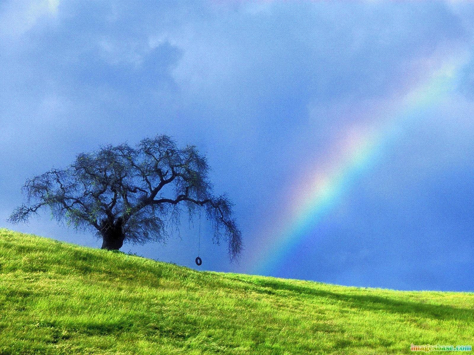 2993 скачать обои Пейзаж, Деревья, Трава, Небо, Радуга - заставки и картинки бесплатно