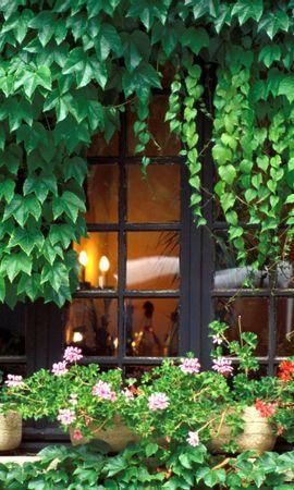 20552 скачать обои Растения, Цветы, Дома, Архитектура - заставки и картинки бесплатно